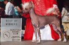 Unicorn's Sol-Orr System Chinese Crested