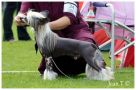 Proud Pony You May Look Chinese Crested