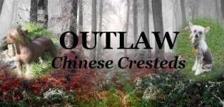 Outlaw Chinese Cresteds