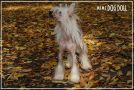 Olegro Katrin Smail For Mimi Dog Doll Chinese Crested